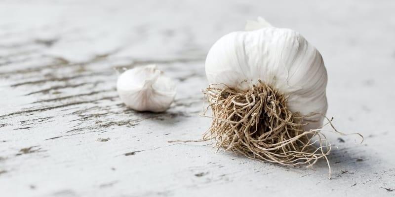 beli luk i prostata