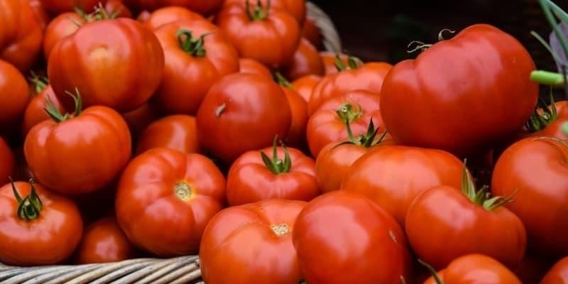 giht i paradajz
