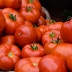paradajz i dijabetes